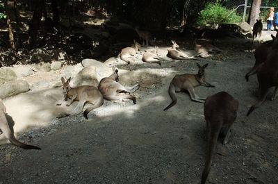 australia02.jpg