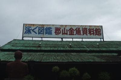 kingyo01.jpg